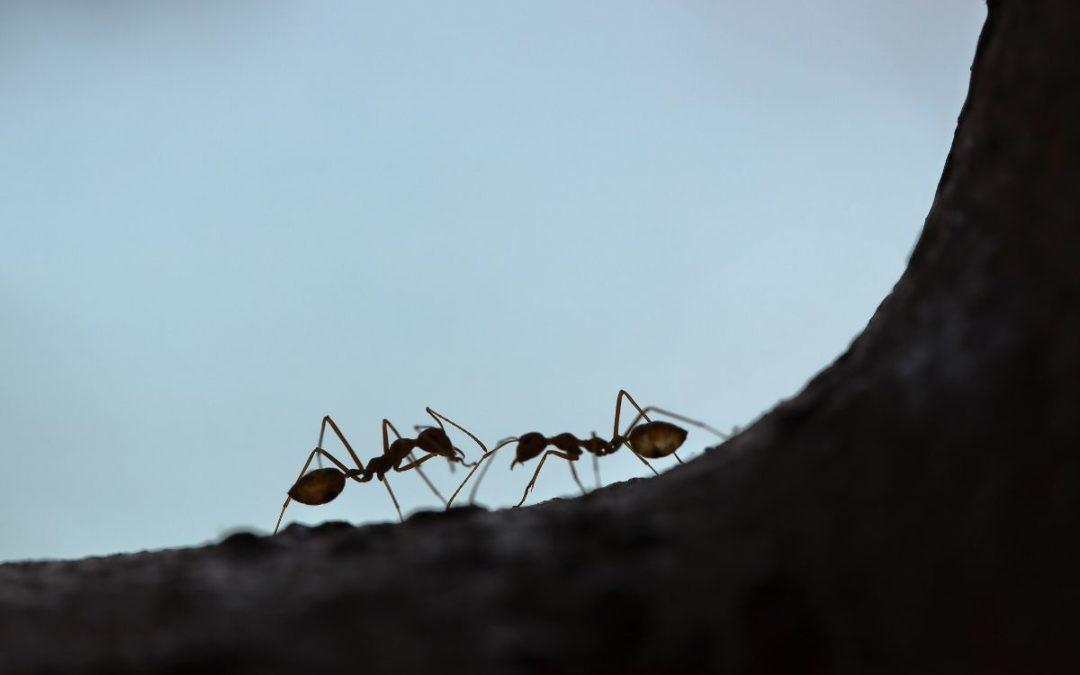 Church, Be Like an Ant Colony